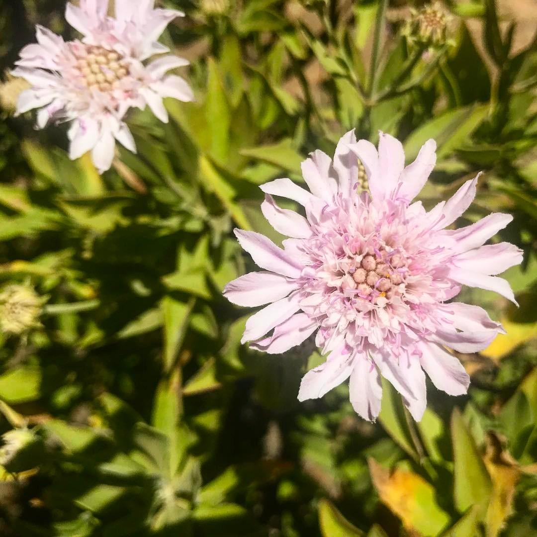 flowers flower flowerstagram flowersofinstagram flowerslovers floweroftheday flowerpower flowermagic flowerporn instaflowerhellip