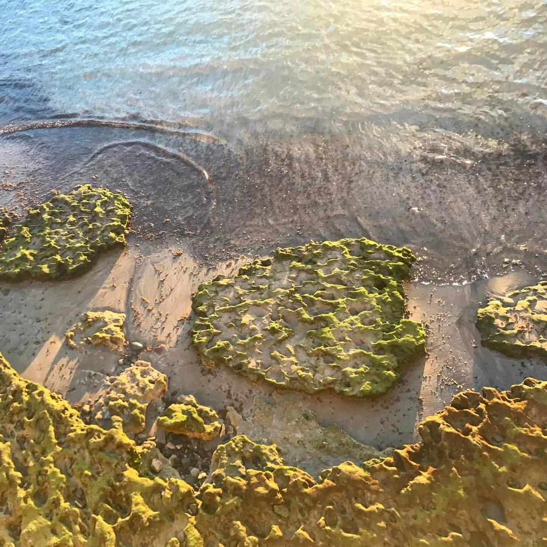 LasPalmasDeGranCanaria lascanteras playalascanteras laspalmas laspalmasdegrancanaria sunset mareeba mareabaja mareebasse alguehellip