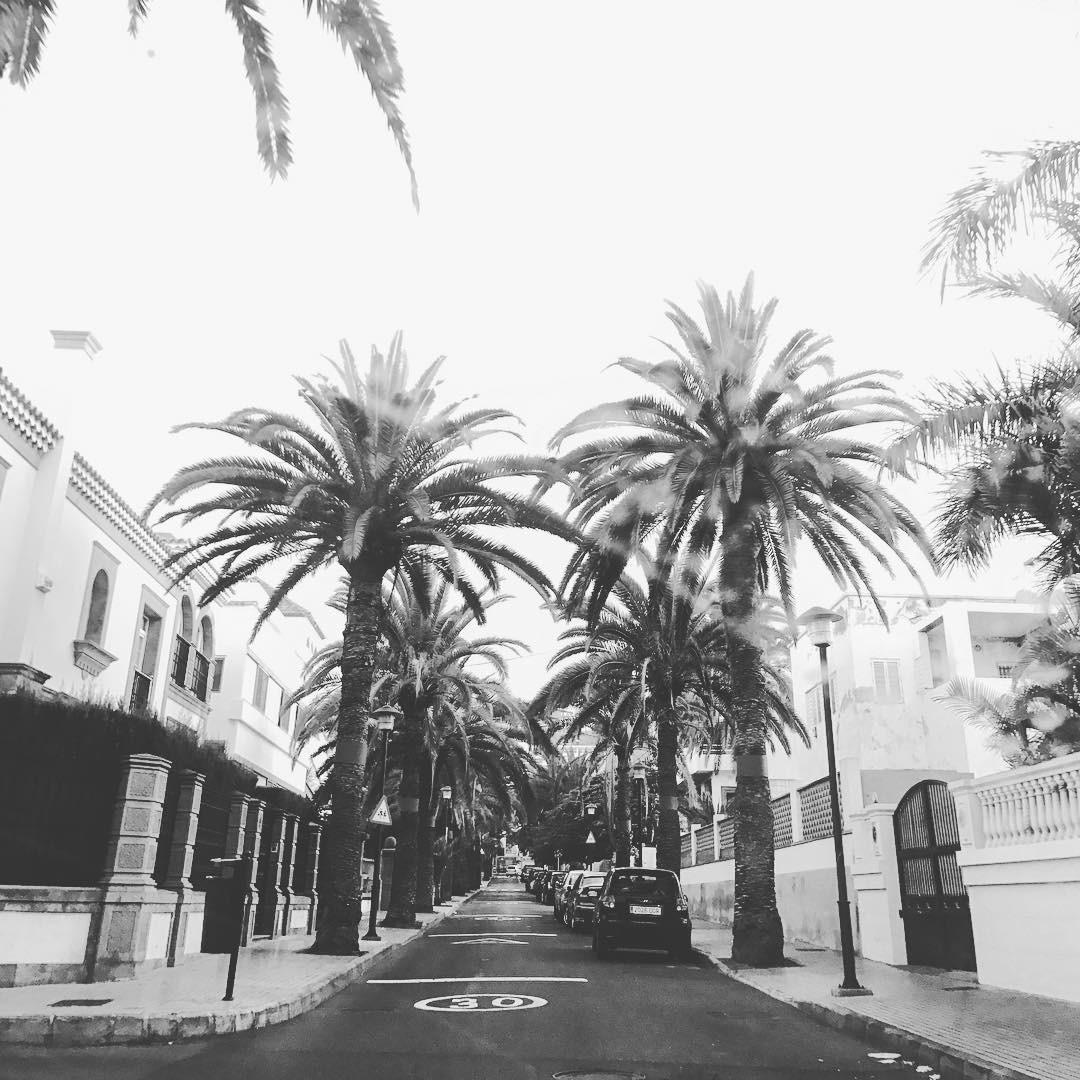 palmtrees laspalmas grancanaria grancanarias streetphotography streetstyle laspalmasdegrancanaria blackandwhitephoto blackandwhitephotography bnwhellip
