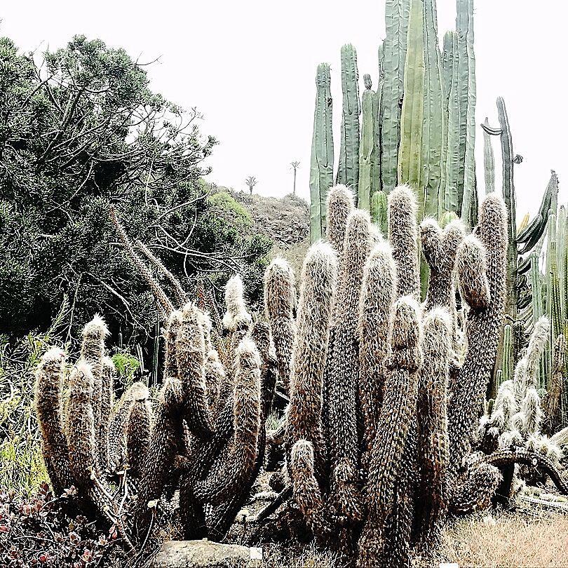 Le monde entier est un cactus  Il est impossiblehellip